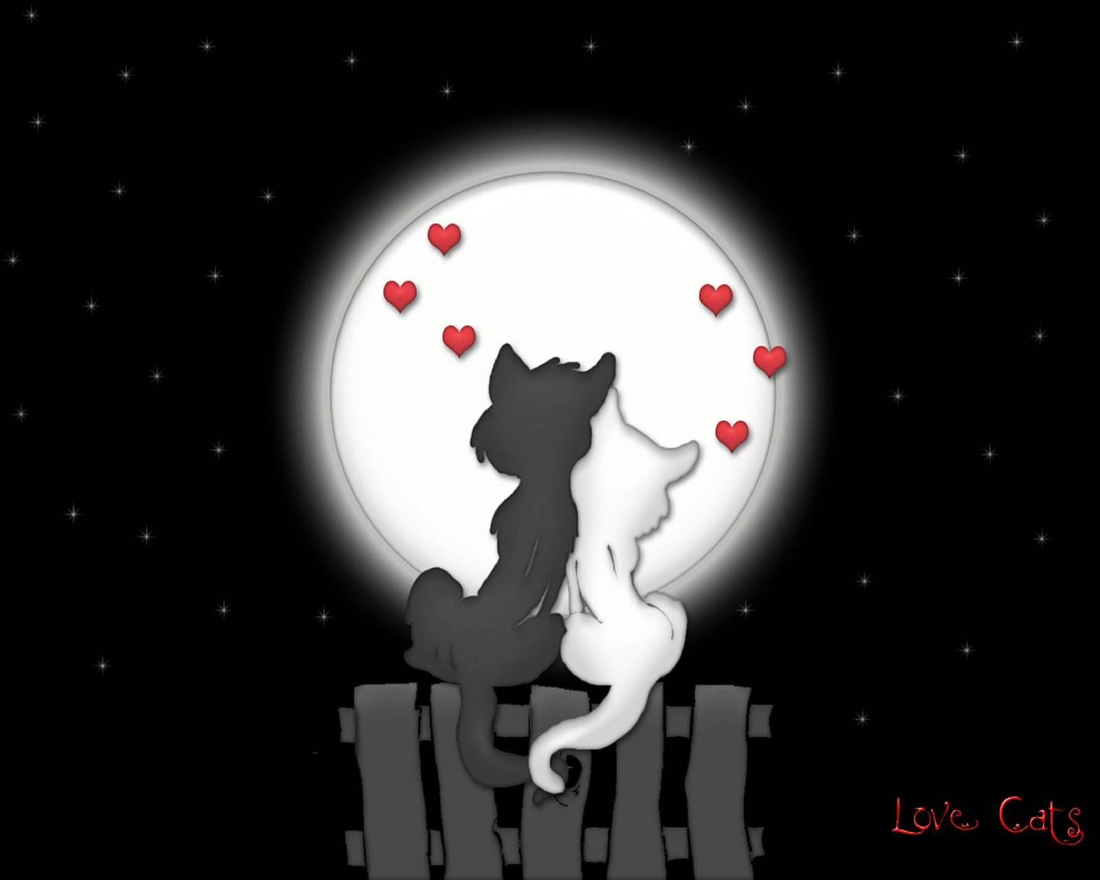 عکس زمینه گربه های عشق پس زمینه