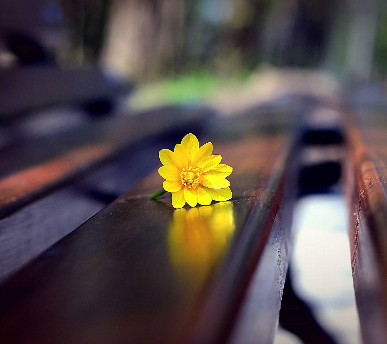عکس زمینه گل بر روی نیمکت پس زمینه