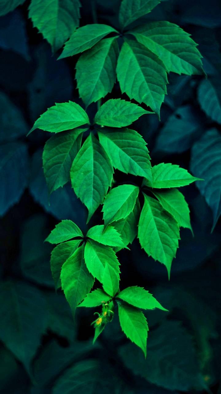 عکس زمینه برگ سبز زیبا پس زمینه