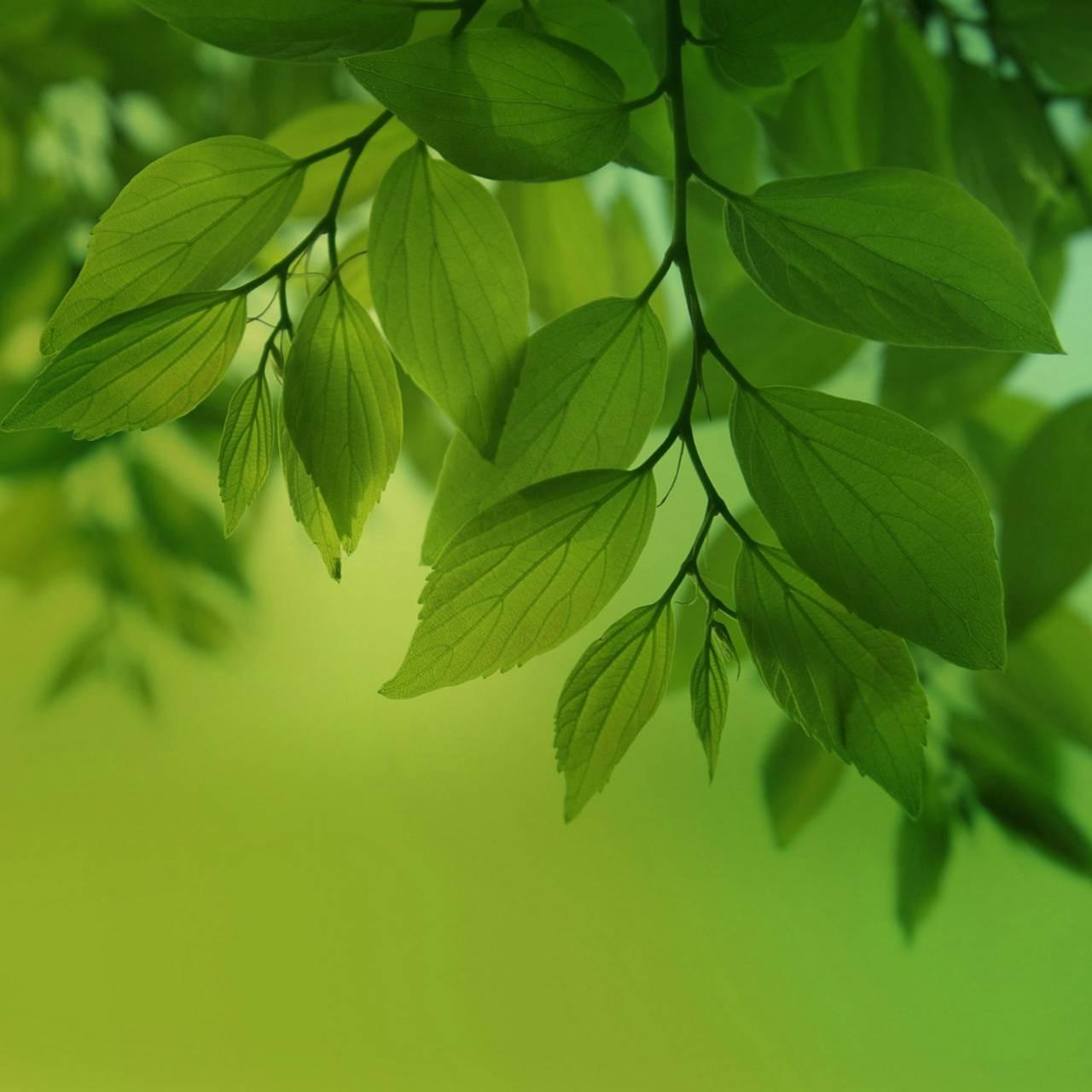 عکس زمینه برگ سبز شاداب پس زمینه