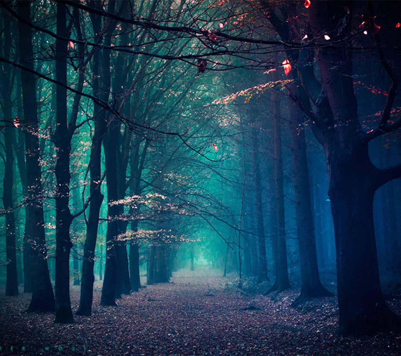 عکس زمینه طبیعت جنگل مه آلود سبز آبی HD پس زمینه