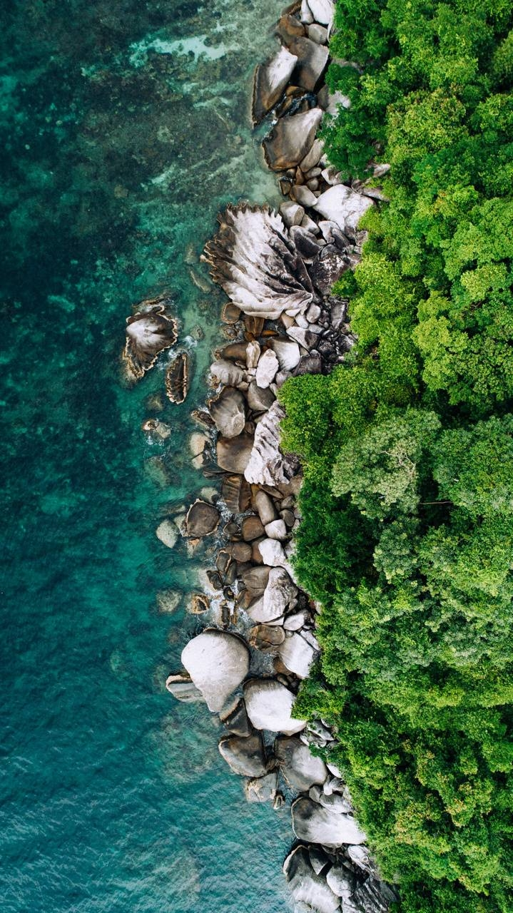 عکس زمینه نمای هوایی اقیانوس و جنگل پس زمینه