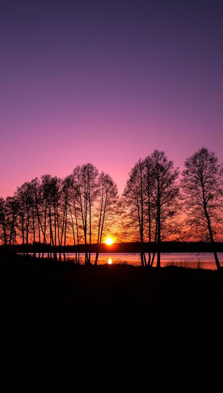 عکس زمینه غروب آفتاب بین درختان پس زمینه