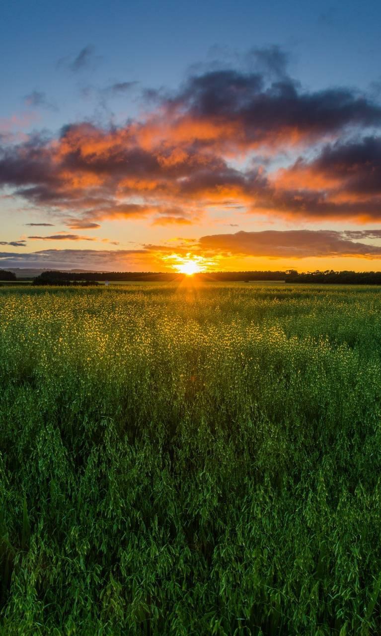 عکس زمینه طلوع خورشید در باغ سبز پس زمینه