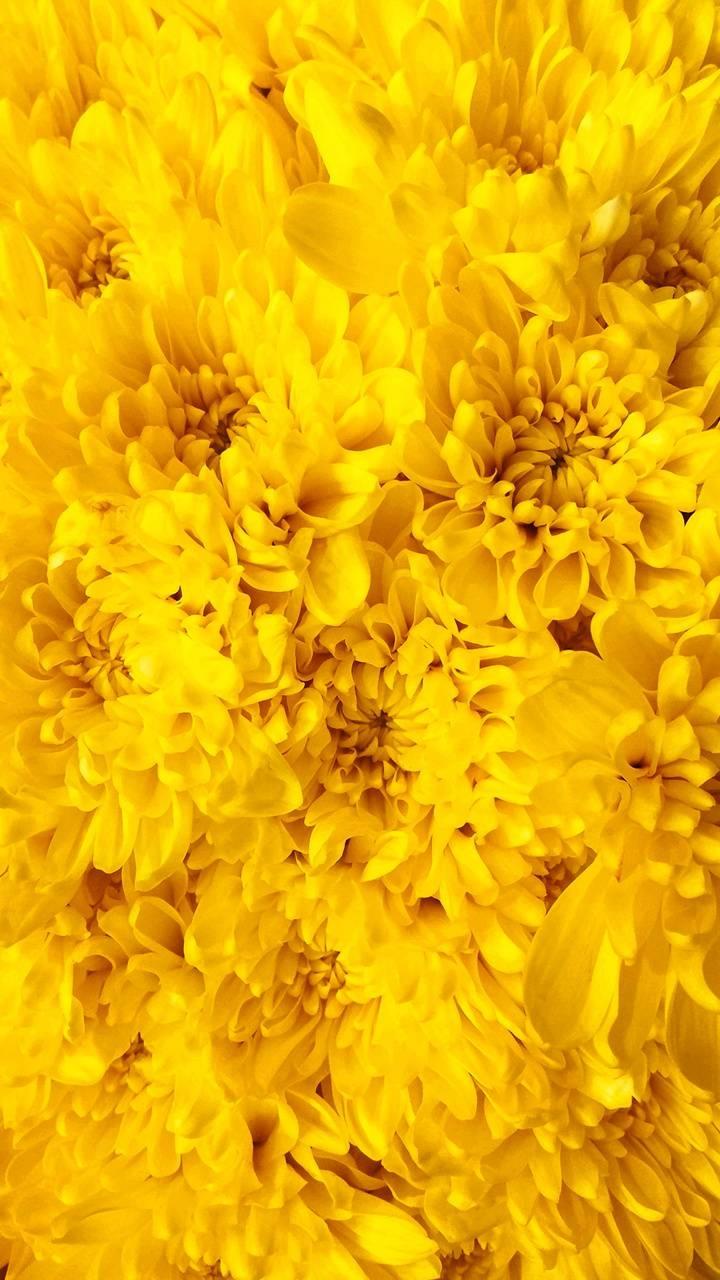 عکس زمینه گل های زرد پس زمینه