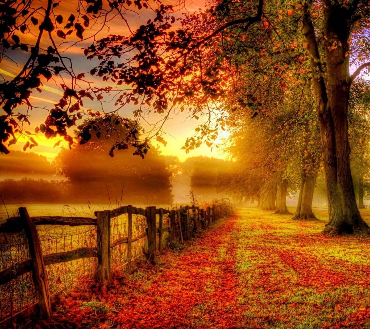 عکس زمینه طبیعت پاییز طلایی پس زمینه
