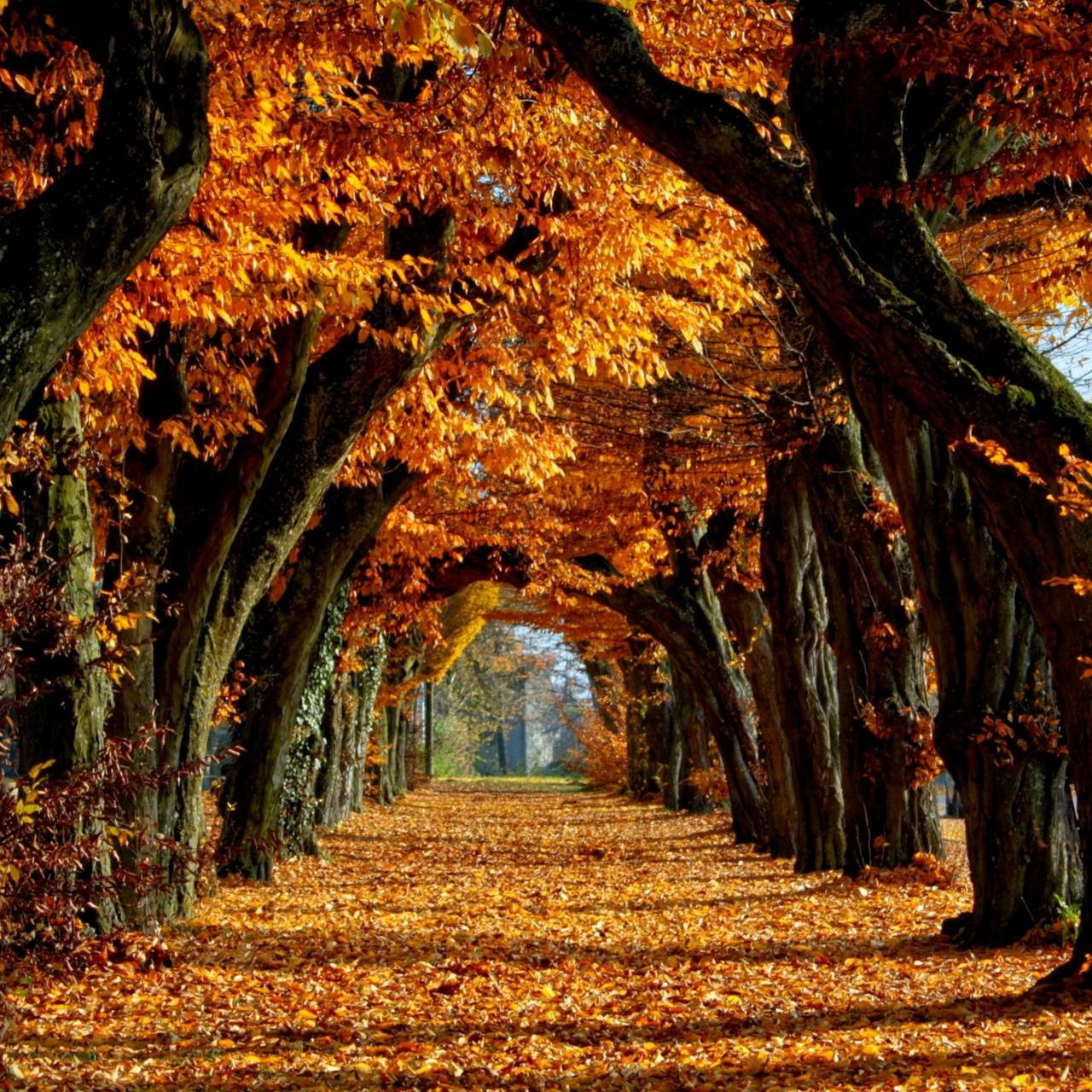 عکس زمینه برگ ریزان پاییز طلایی پس زمینه