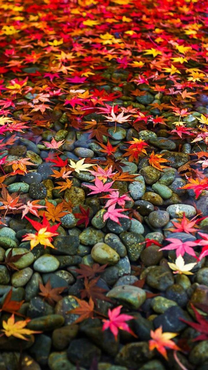 عکس زمینه برگهای پاییزی روی آب پس زمینه