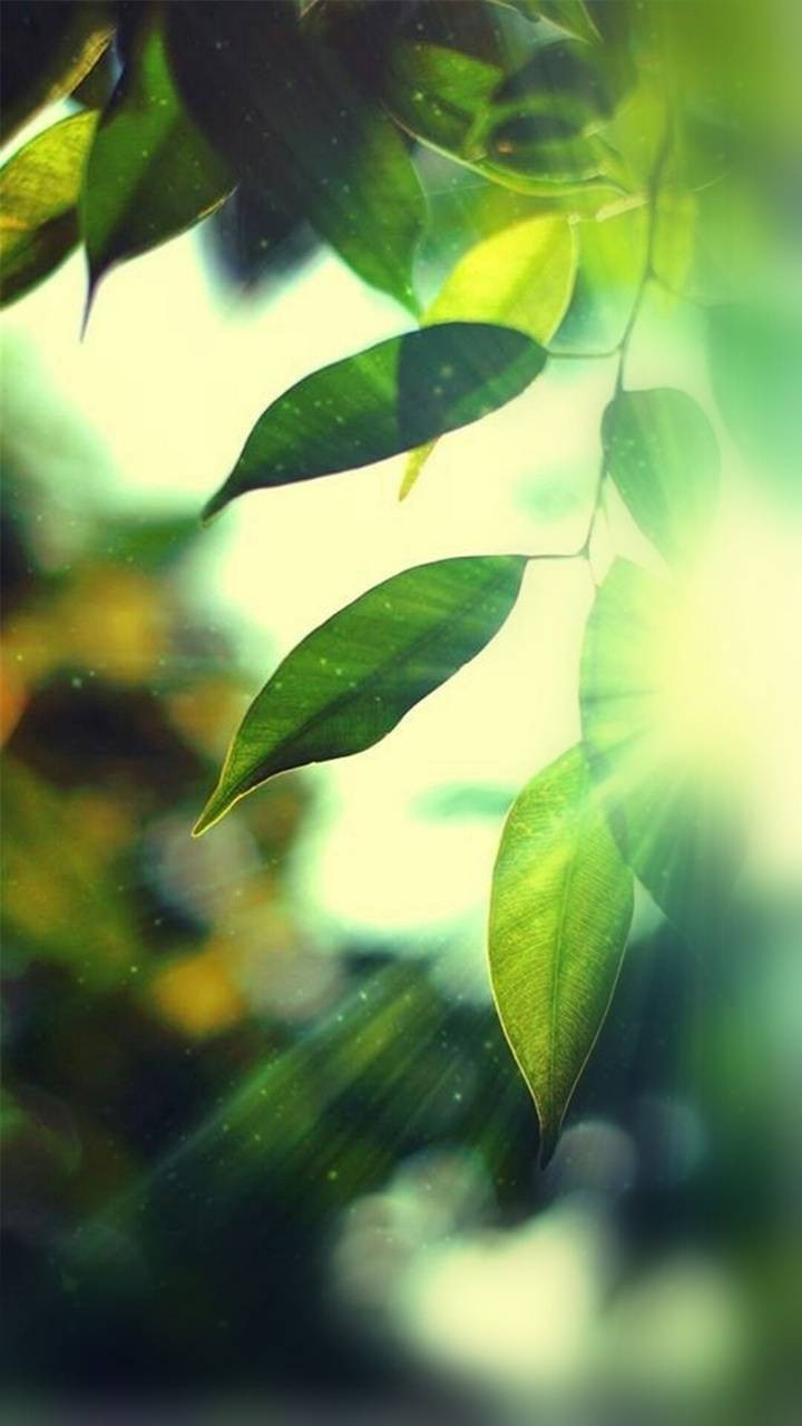 عکس زمینه درخشش نور لابه لای برگها پس زمینه