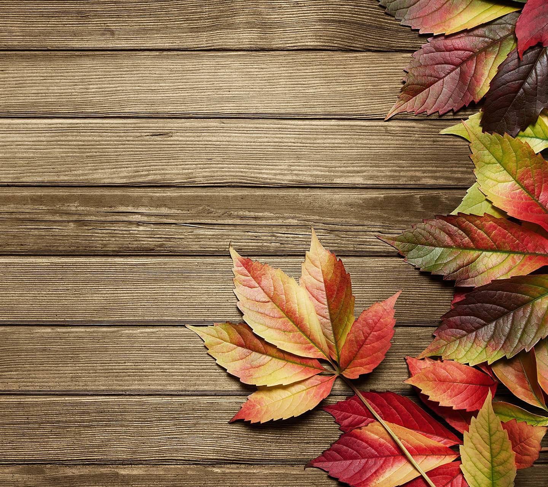 عکس زمینه چوب و برگهای پاییزی پس زمینه