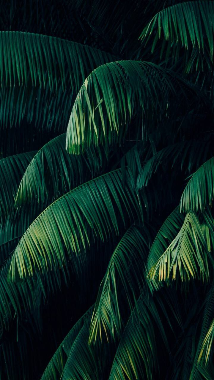 عکس زمینه برگهای سبز آویزان زیبا پس زمینه