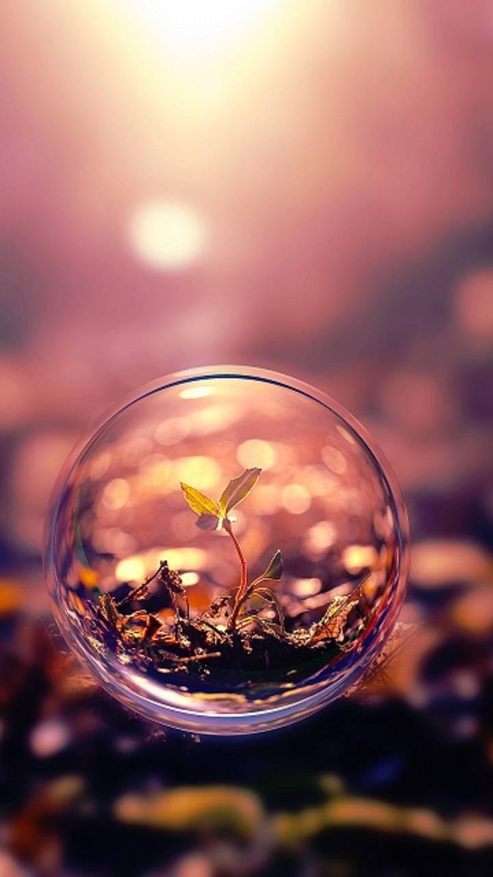 عکس زمینه گیاه در حباب پس زمینه