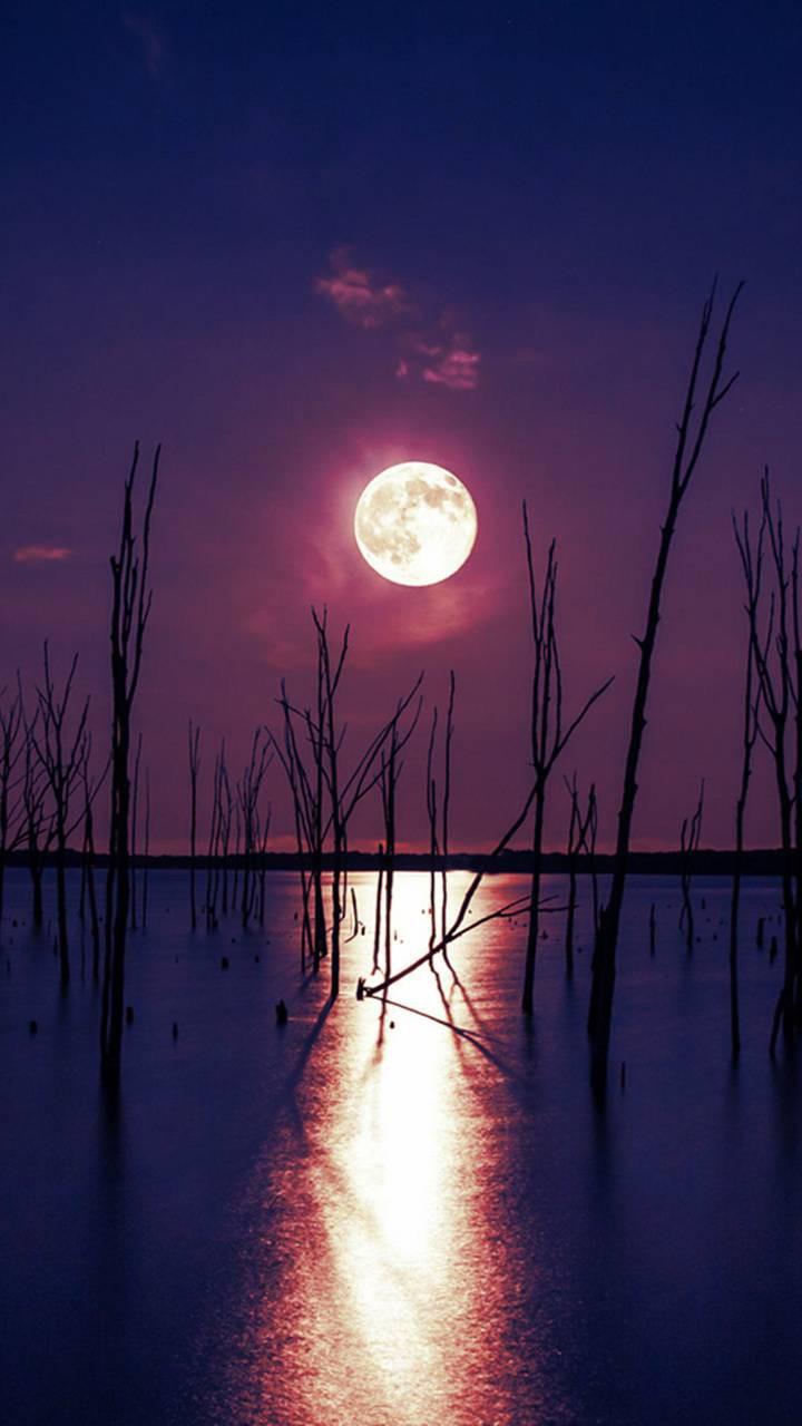 عکس زمینه شب مهتاب روی آب پس زمینه