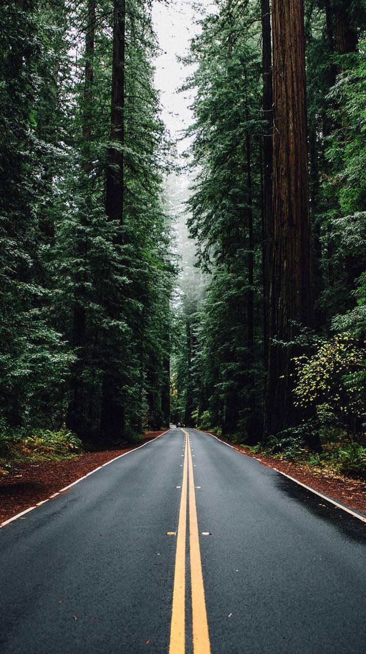 عکس زمینه جاده میان درختان زیبا جنگلی پس زمینه