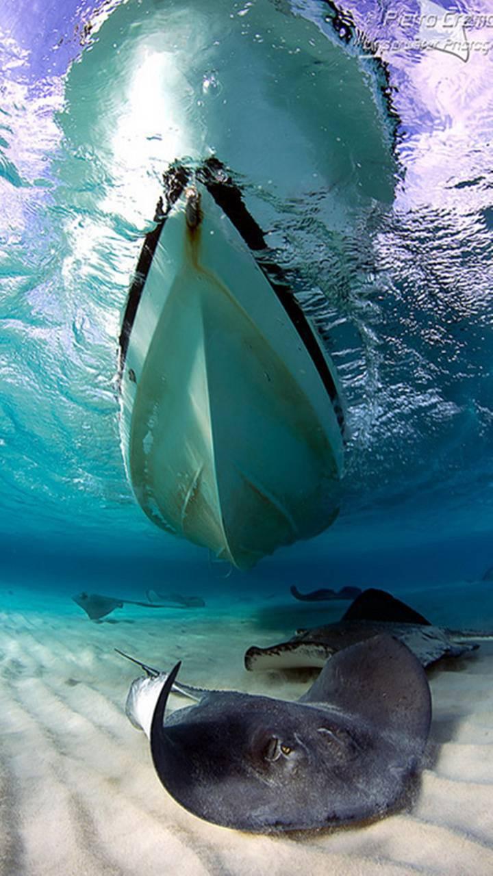 عکس زمینه قایق و ماهی زیر آب پس زمینه