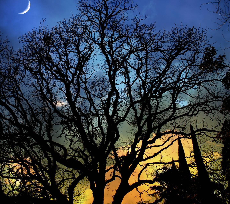 عکس زمینه شبح ساخه های درخت پس زمینه