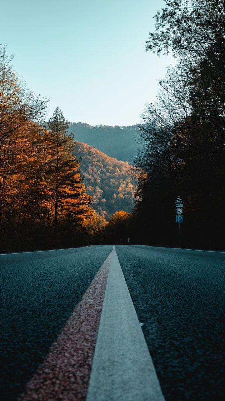 عکس زمینه جاده بین درختان پاییزی غمگین پس زمینه