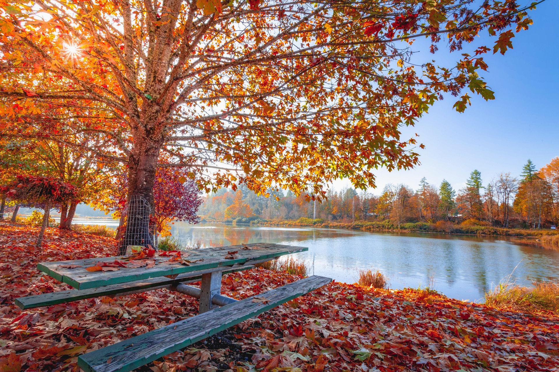 عکس زمینه برگ های پاییزی قرمز و نارنجی در کنار برکه آب پس زمینه