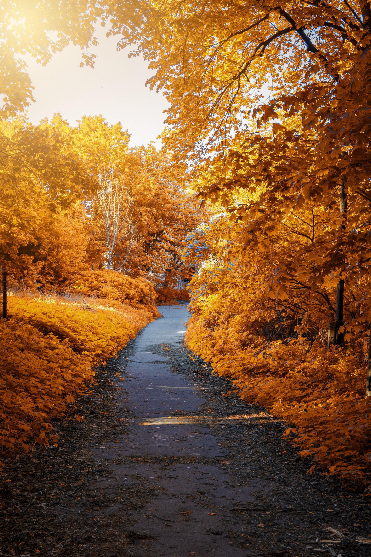 عکس زمینه مسیر پاییزی تن طلایی پس زمینه