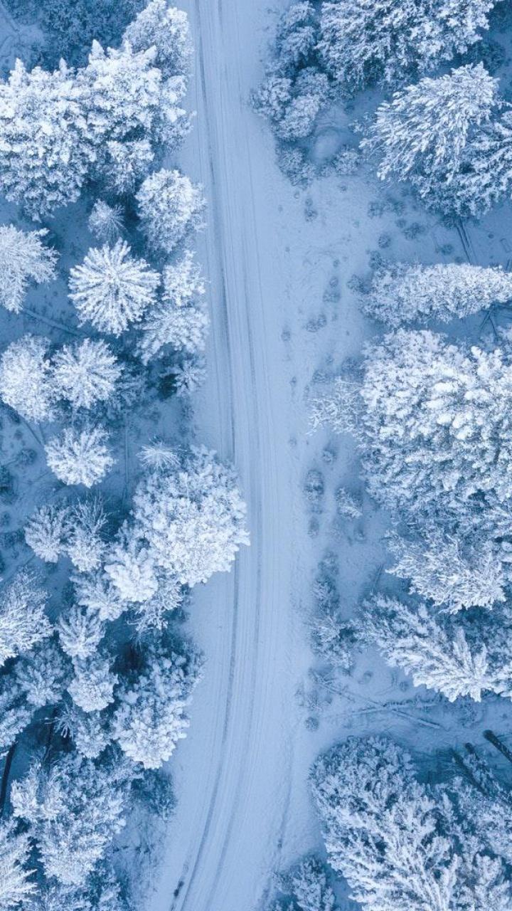 عکس زمینه مسیر برفی میان درختان پس زمینه
