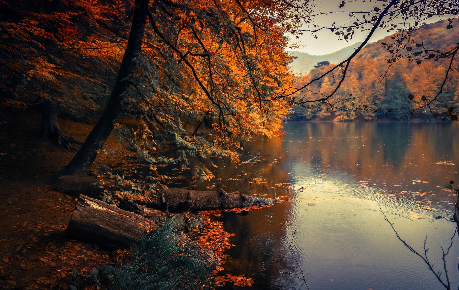عکس زمینه درختان پاییزی در کنار دریاچه پس زمینه