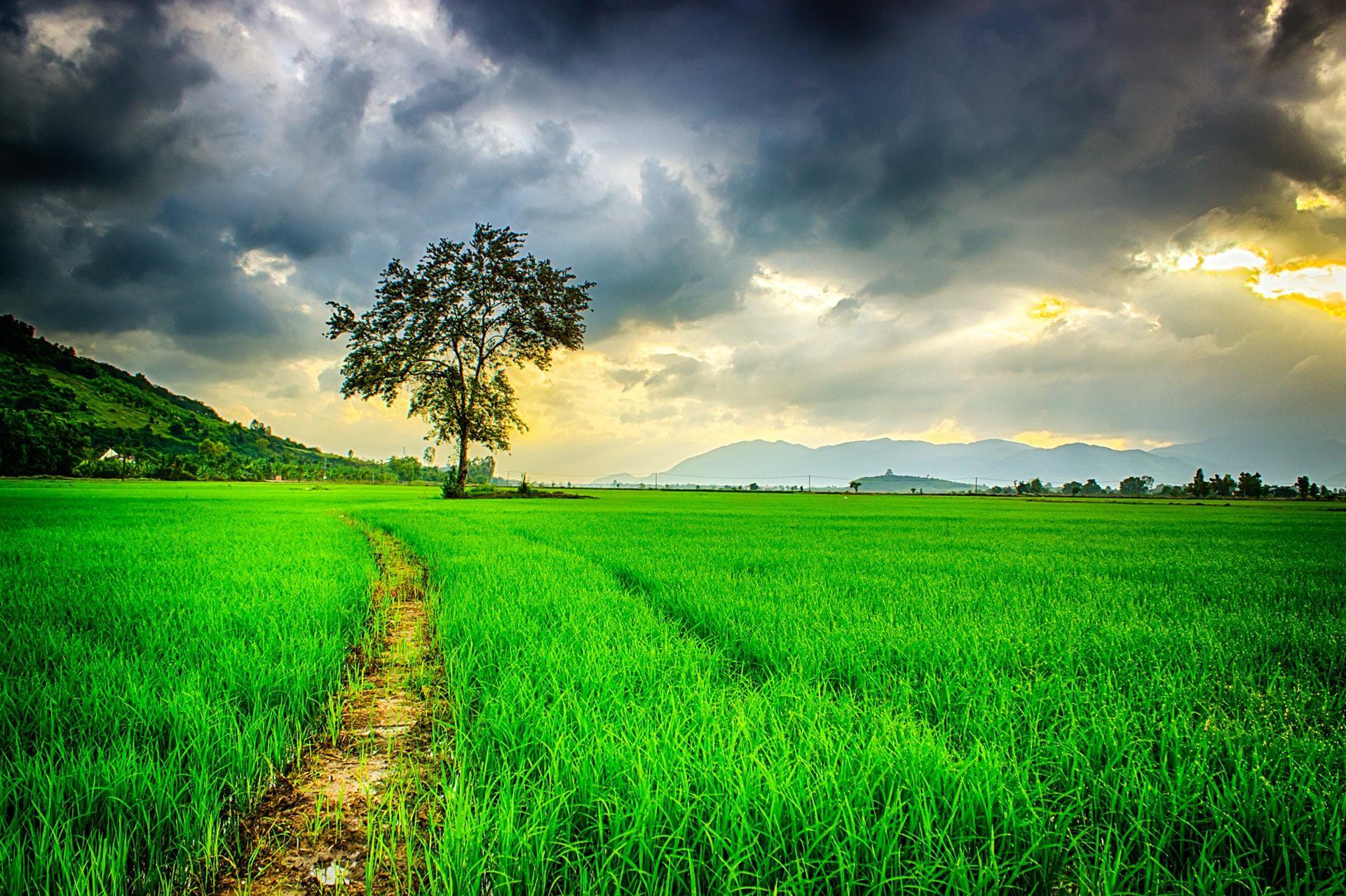 عکس زمینه جاده ای در مزرعه سبز با آسمان ابری پس زمینه
