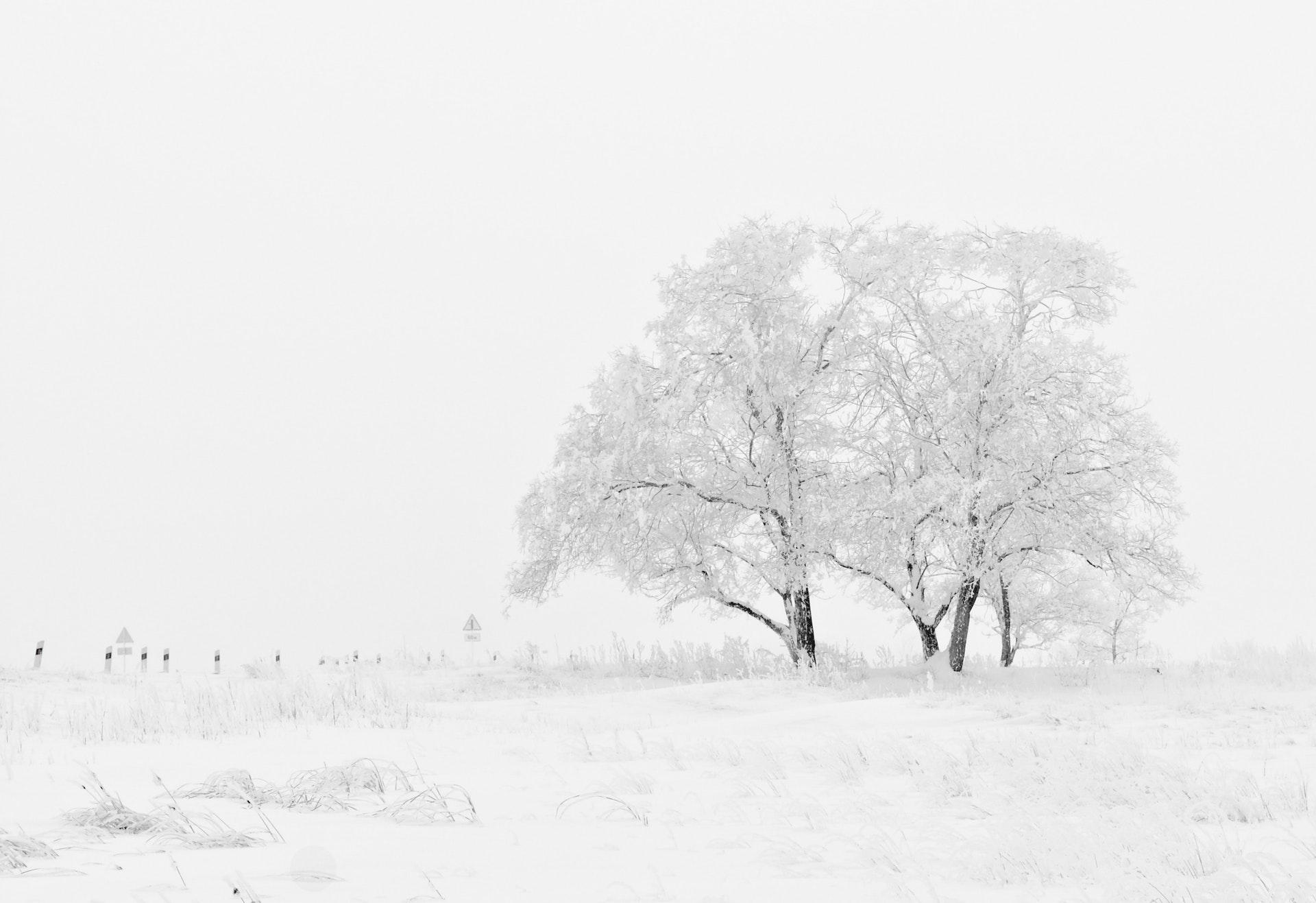 عکس زمینه درختان پوشیده از برف در زمستان پس زمینه