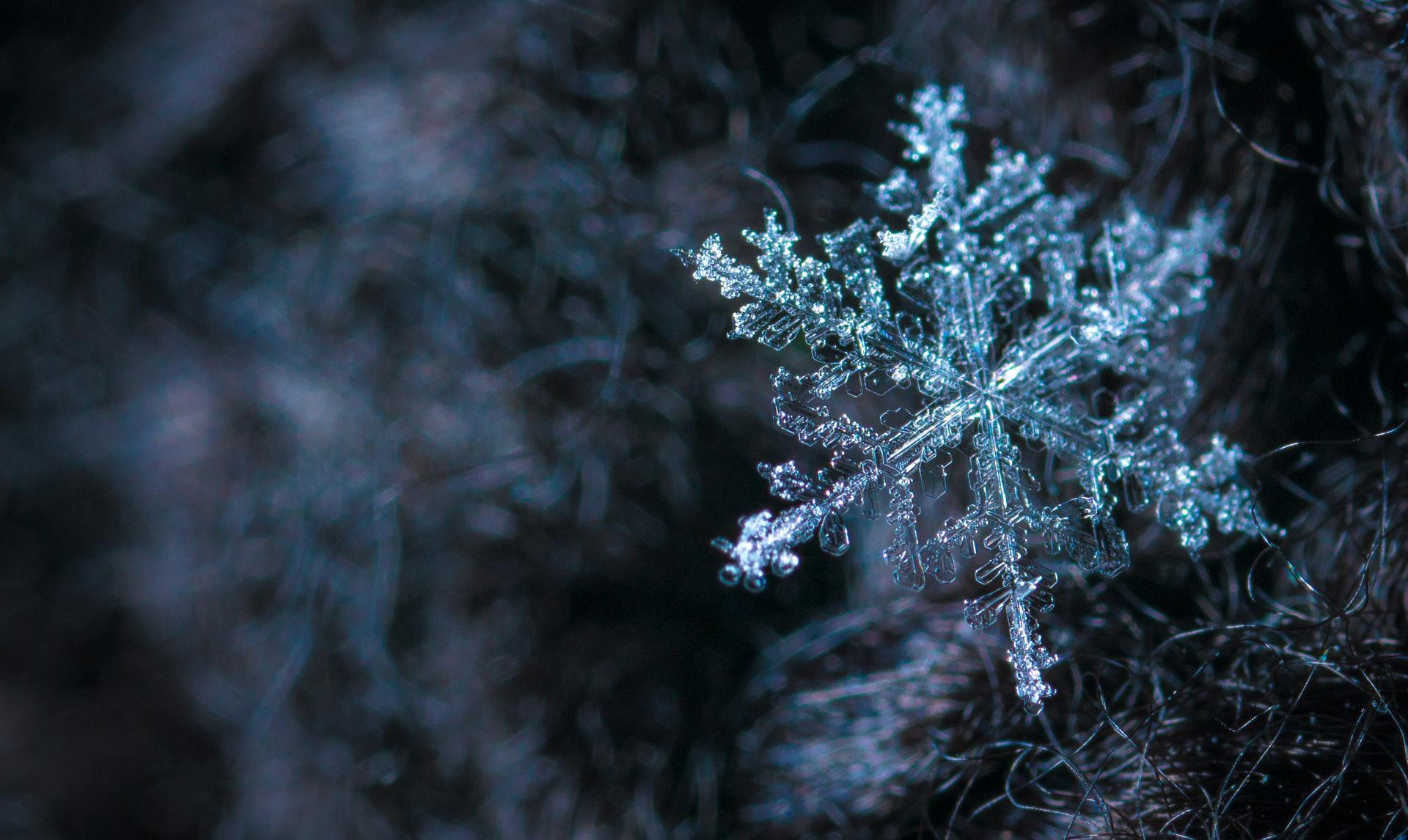 عکس زمینه گل برفی در زمستان پس زمینه