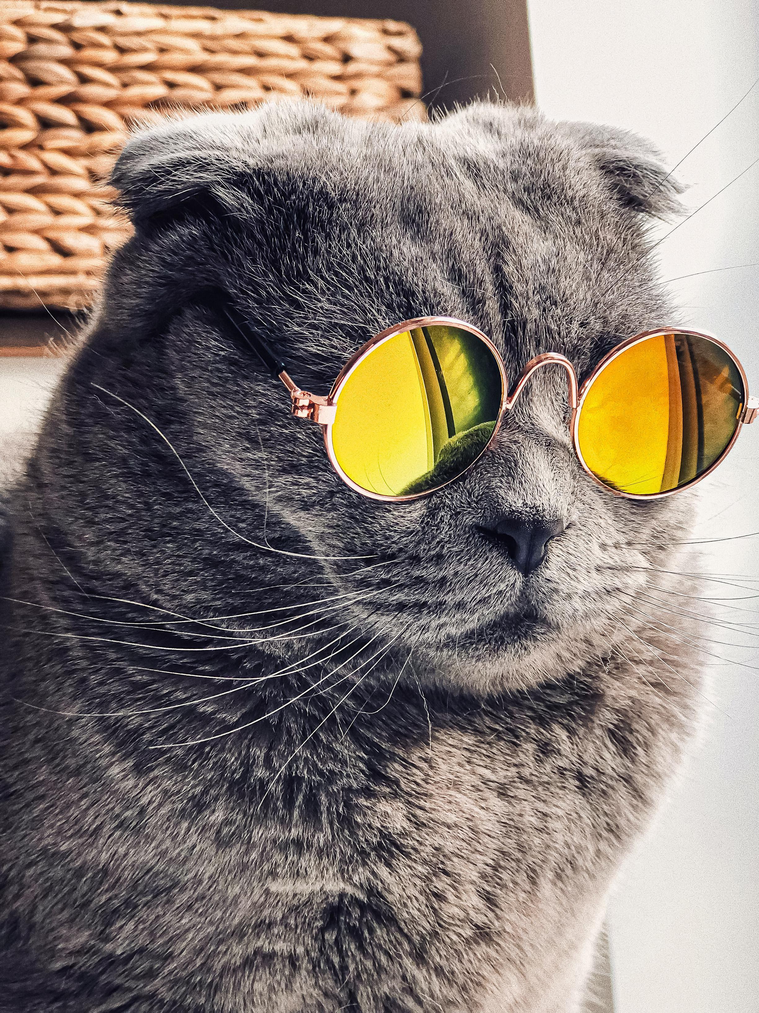 عکس زمینه گربه ناز لاکچری با عینک های طلایی پس زمینه
