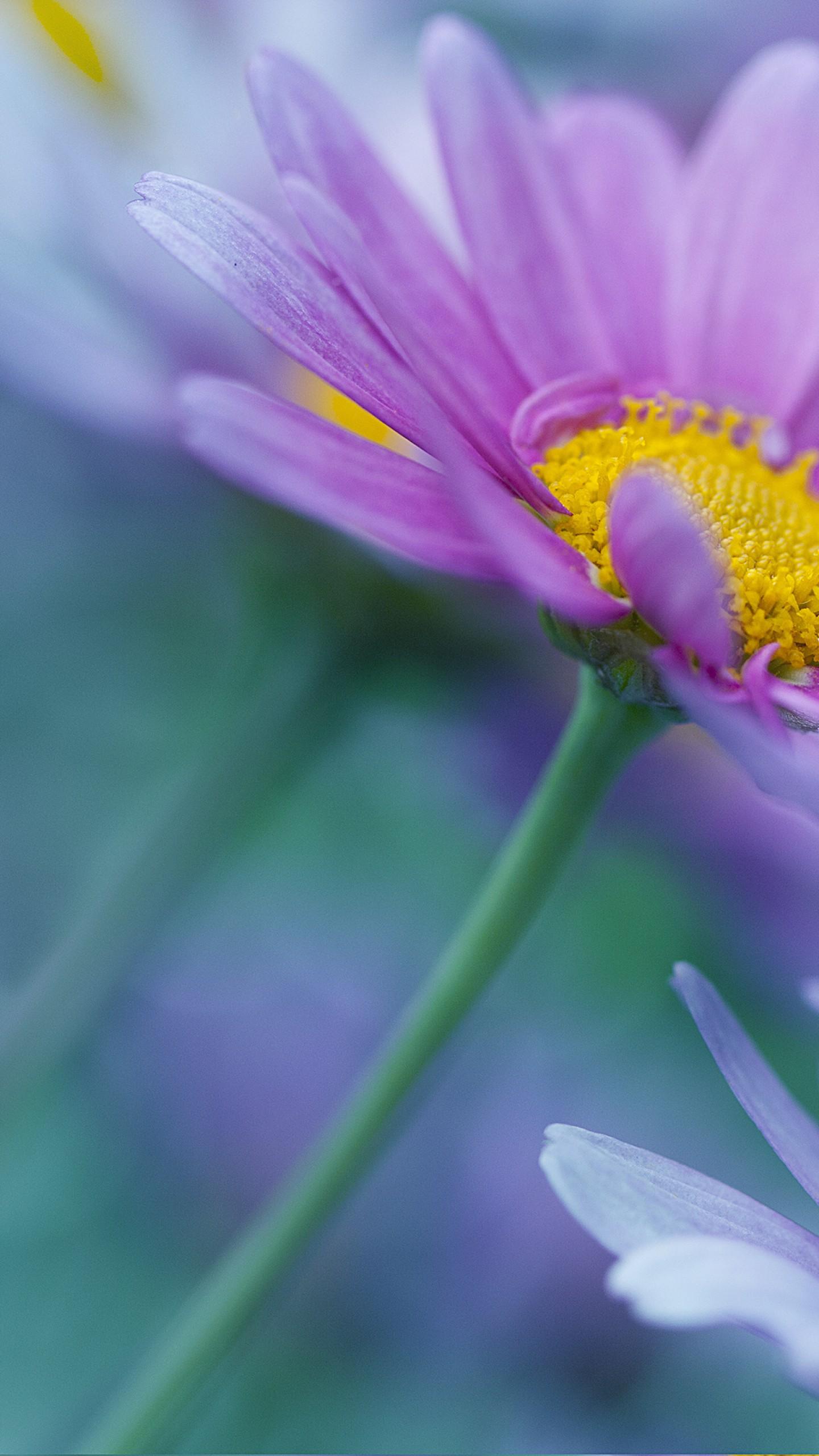 عکس زمینه گل های بنفش بهاری پس زمینه
