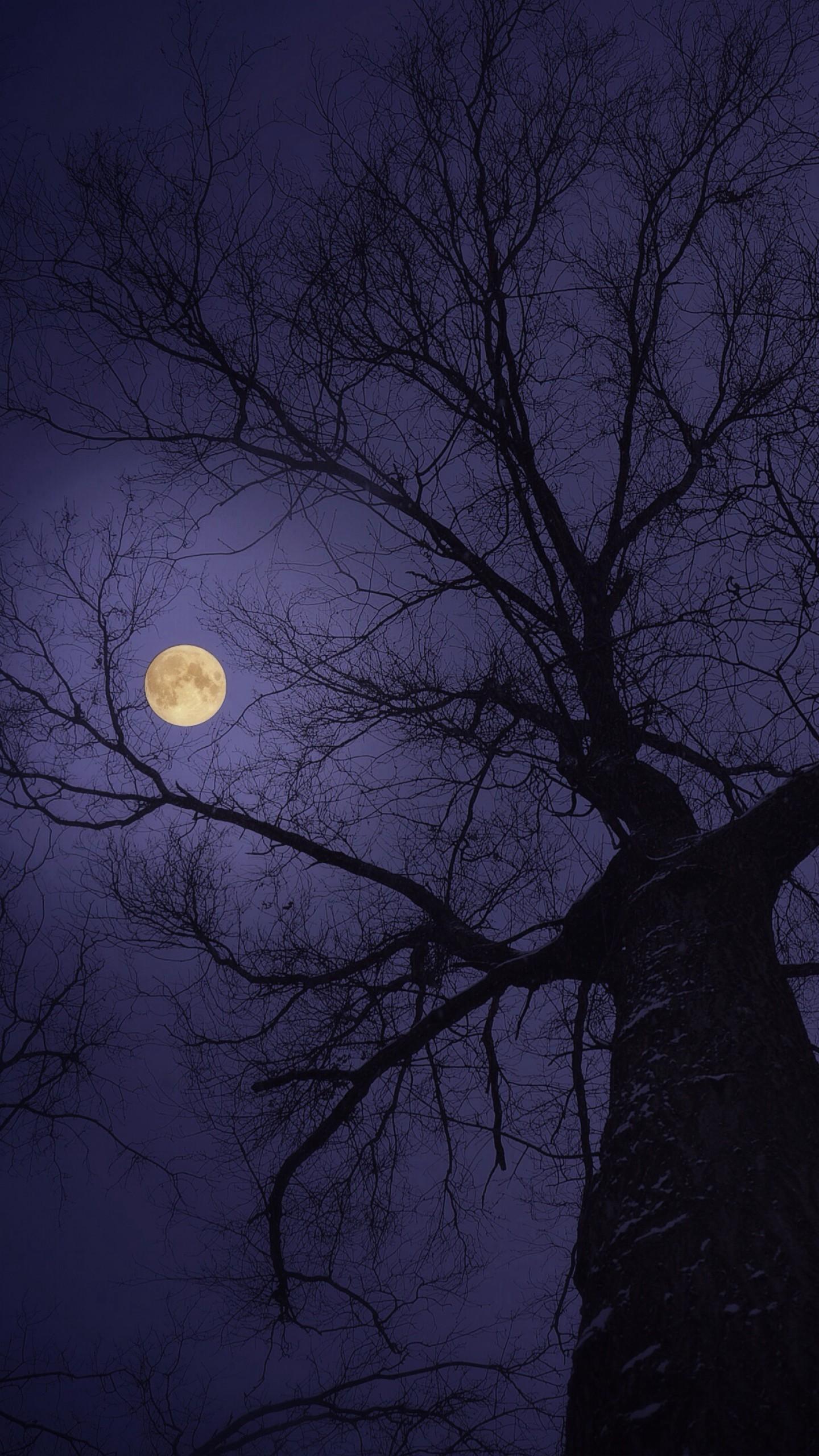 عکس زمینه ماه کامل بر فراز درخت تنومند پس زمینه