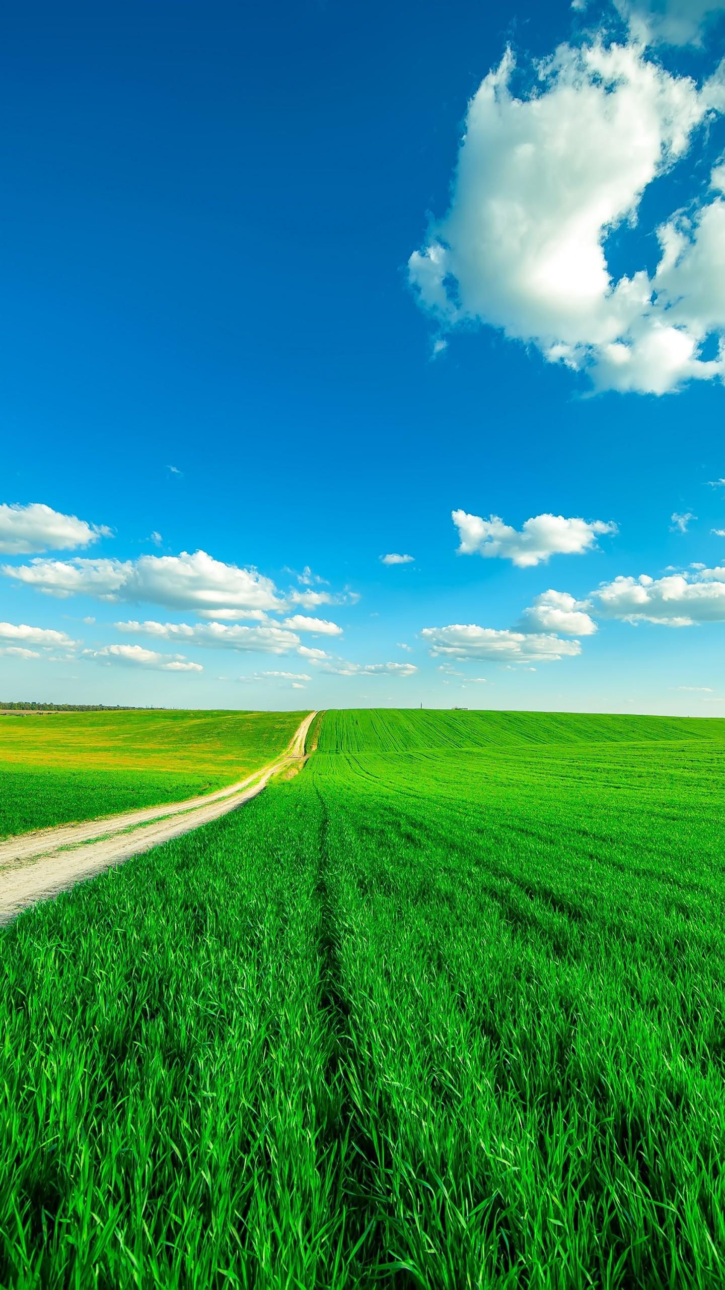 عکس زمینه آسمان پاک و طبیعت سبز پس زمینه