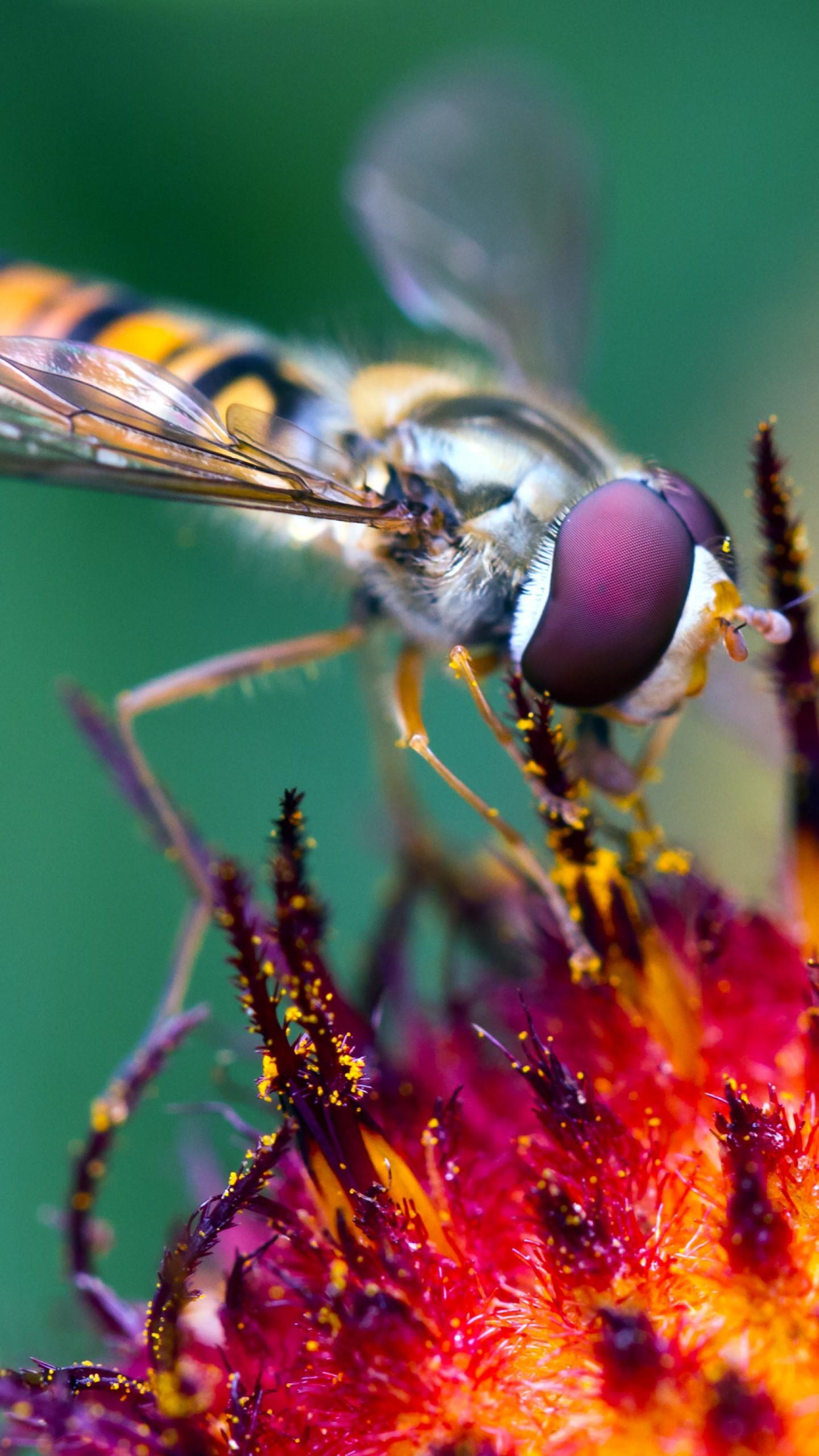 عکس زمینه گرده افشانی زنبور عسل پس زمینه