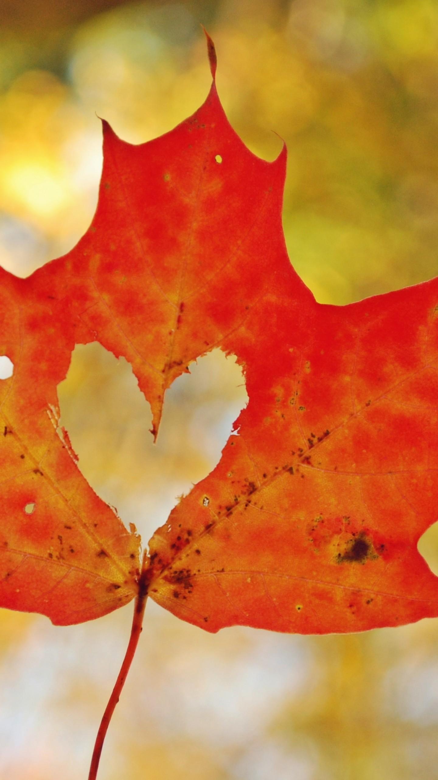 عکس زمینه برگ پاییزی به شکل قلب پس زمینه