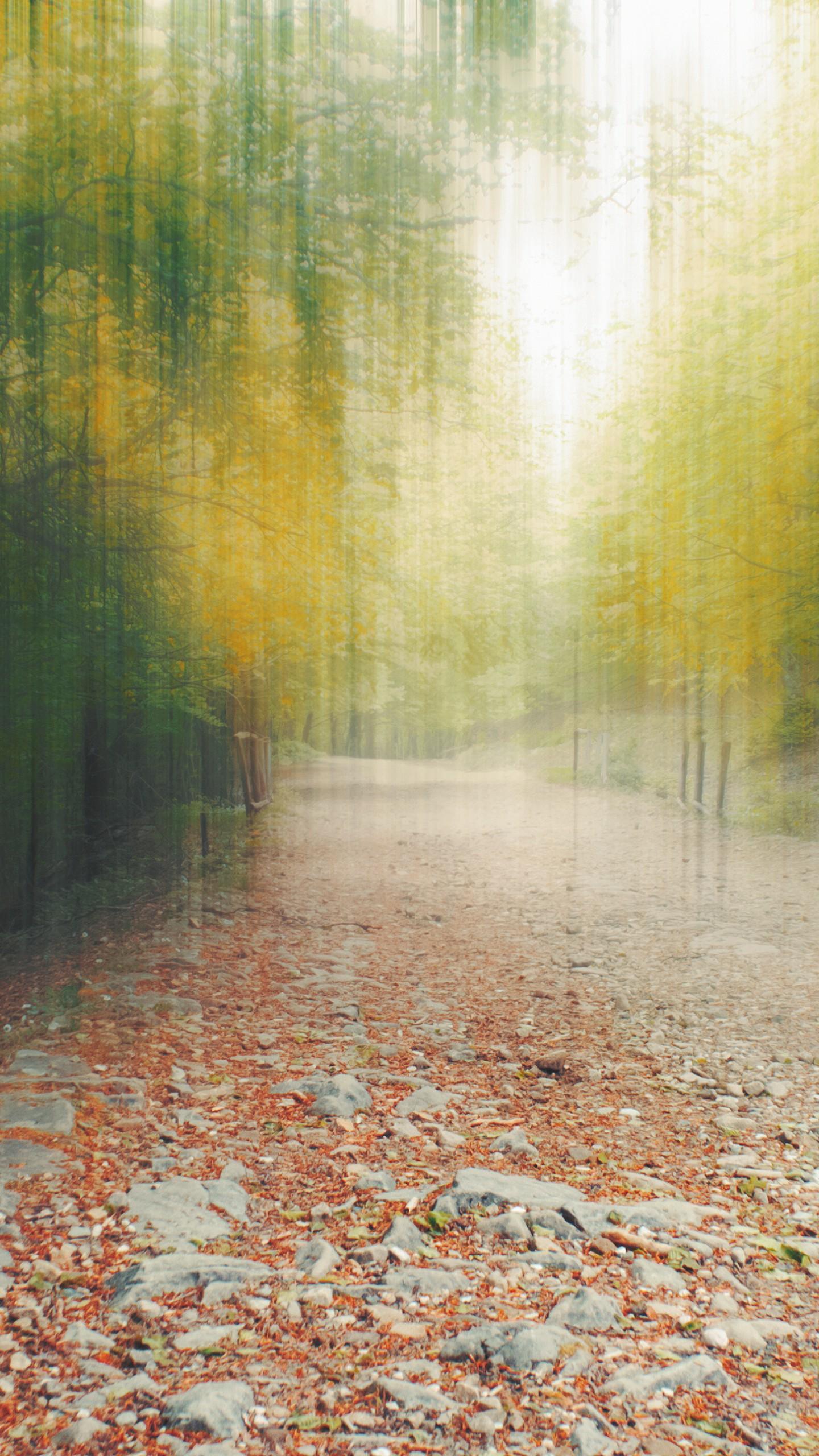 عکس زمینه جنگل و شاخ برگ درختان در پاییز پس زمینه