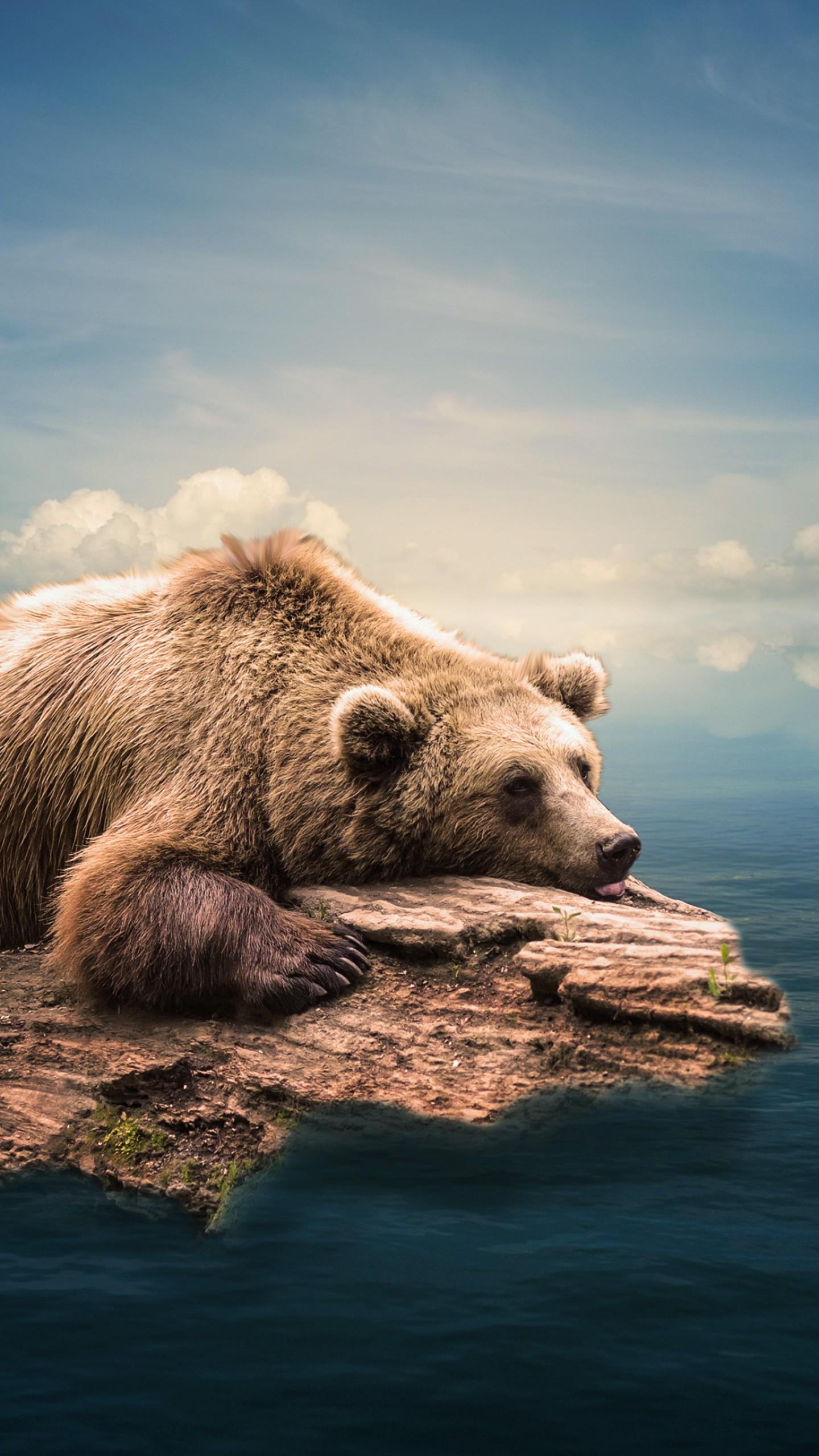 عکس زمینه خرس آبی شناور در آب پس زمینه