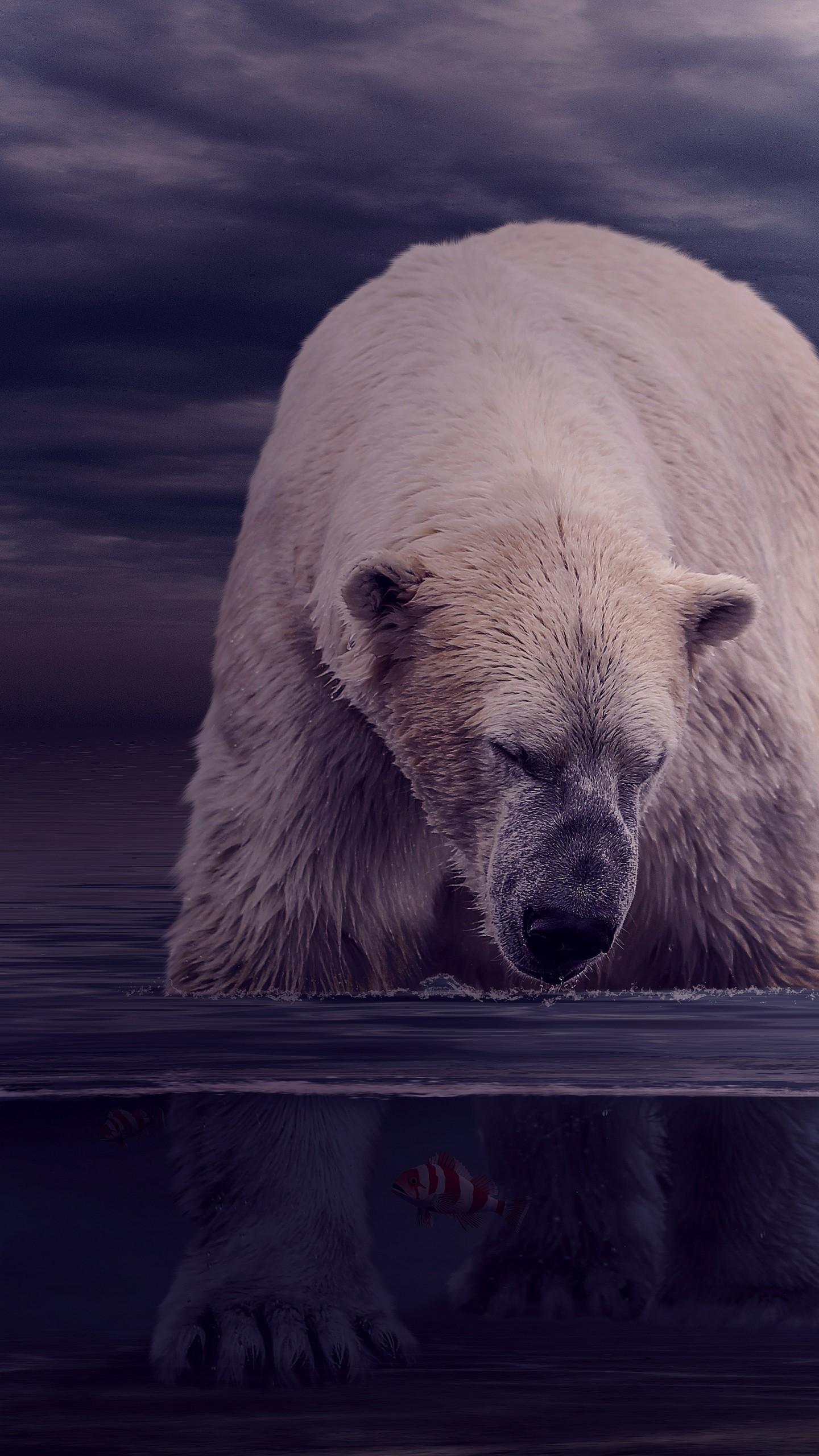 عکس زمینه خرس قطبی در حال شکار ماهی زیر آب پس زمینه