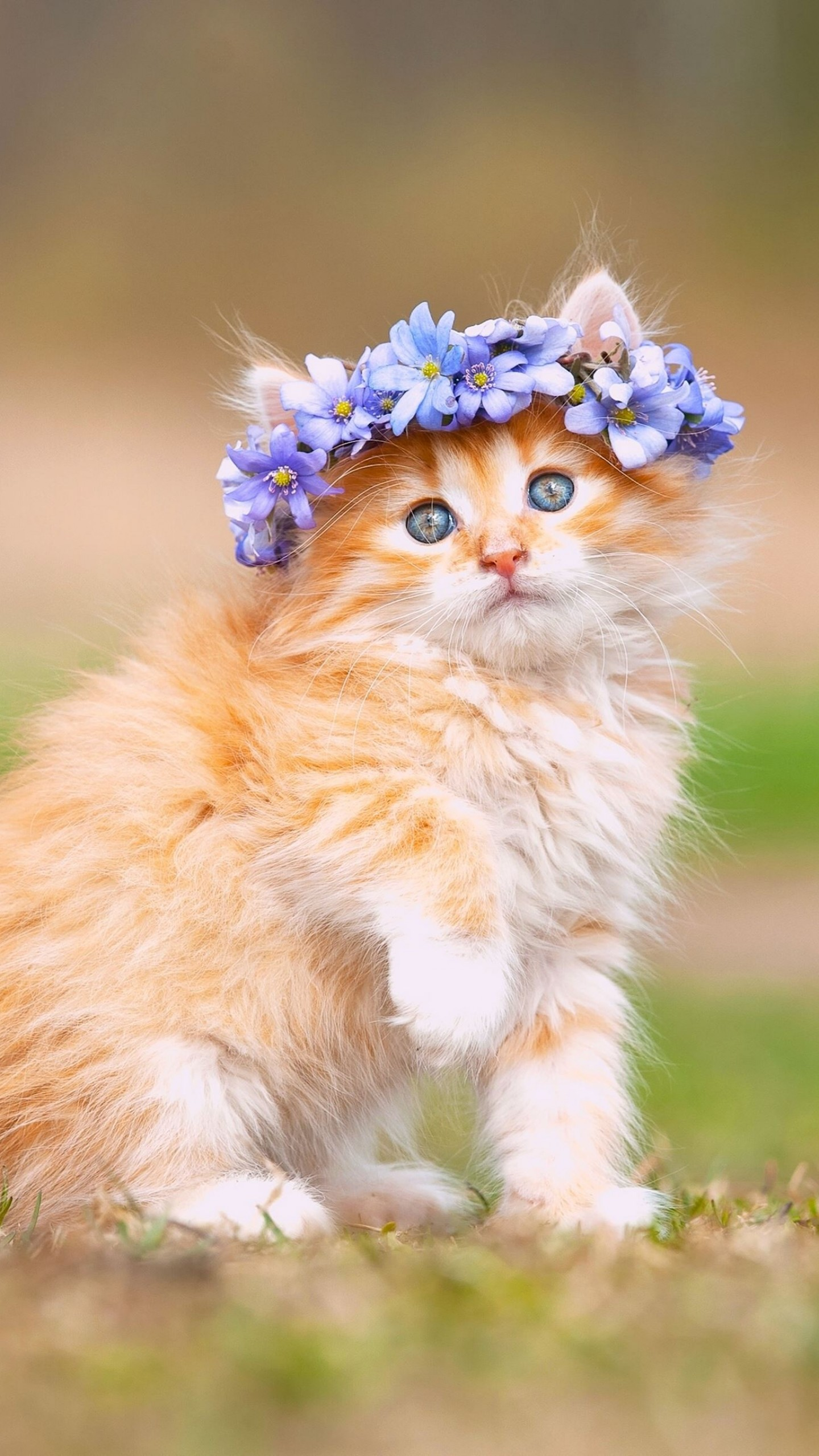 عکس زمینه بچه گربه ناز با تاج گل بنفش پس زمینه
