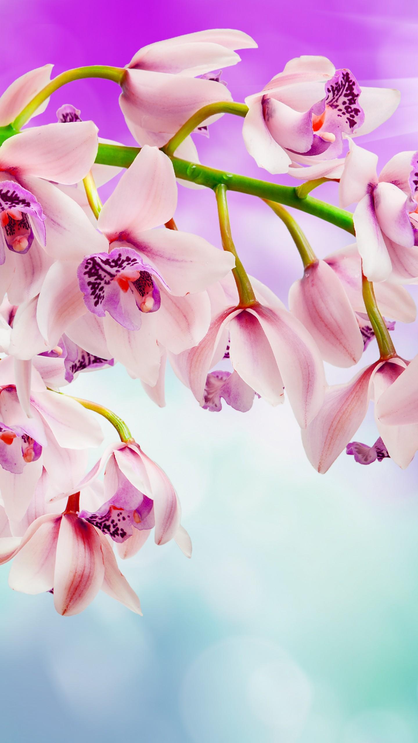 عکس زمینه گل های ارکیده بسیار زیبا پس زمینه