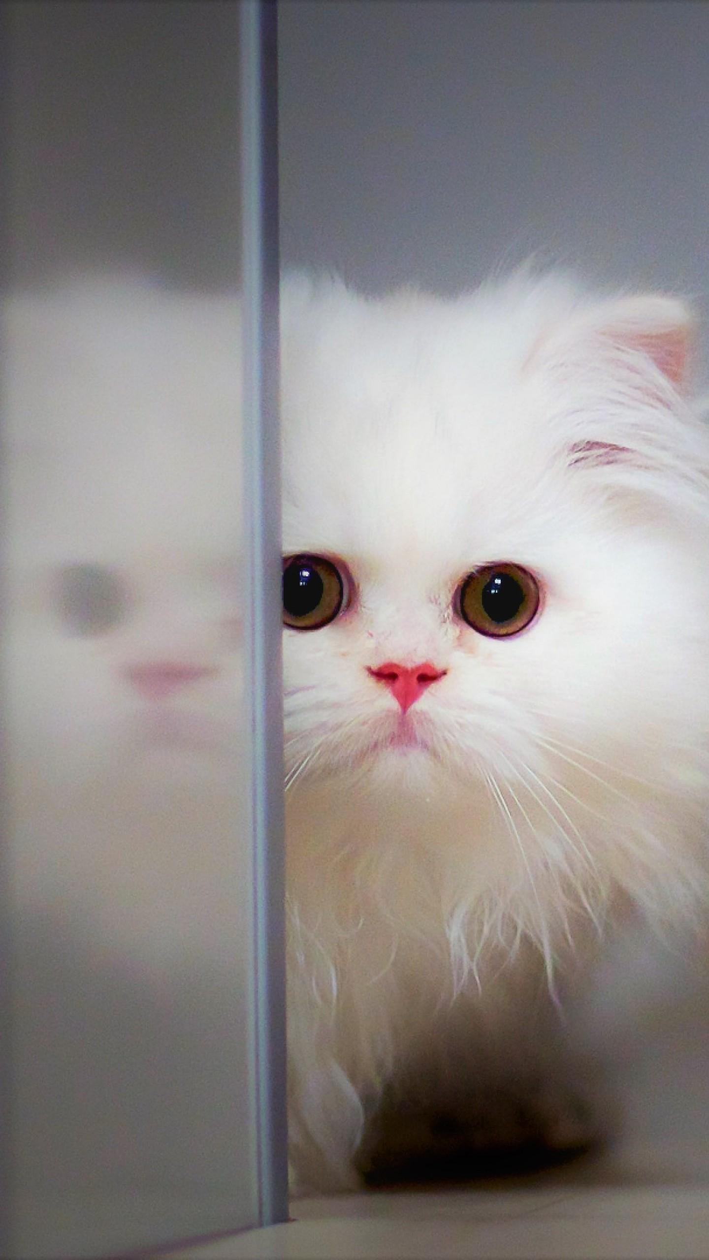 عکس زمینه بچه گربه سفید ناز بامزه 4K پس زمینه