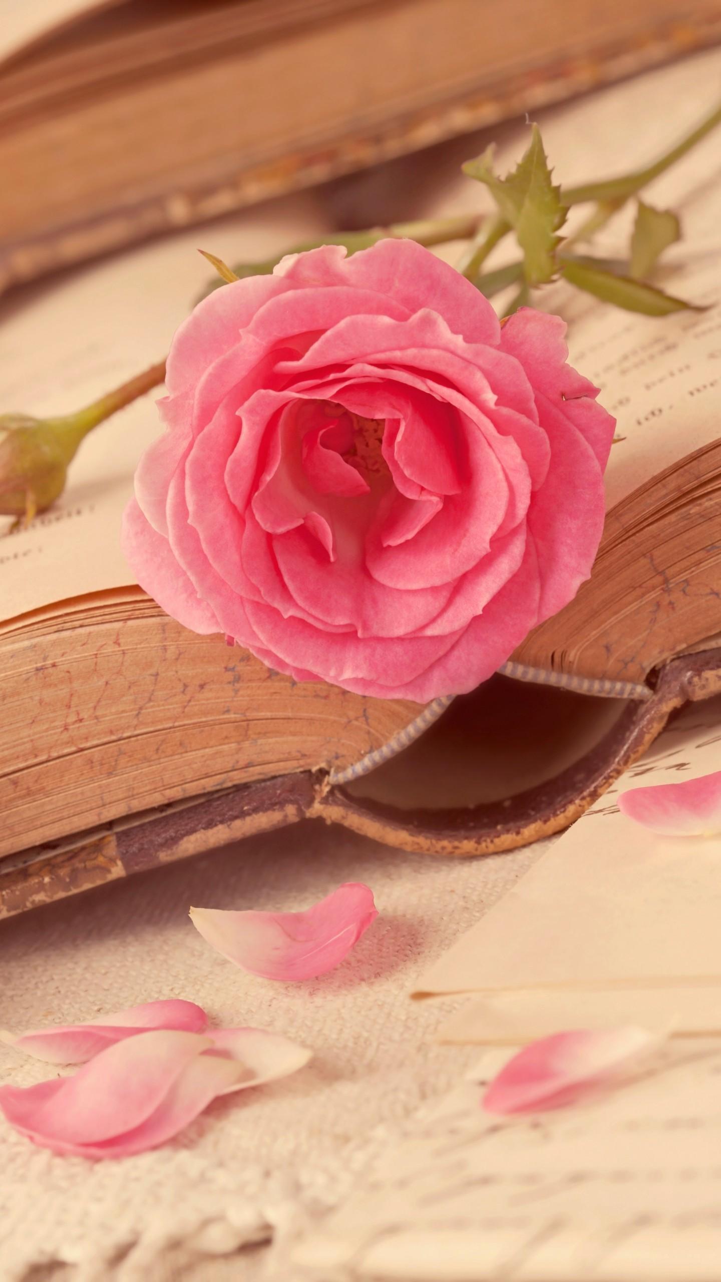 عکس زمینه قلب و عشق و گل رز صورتی پس زمینه