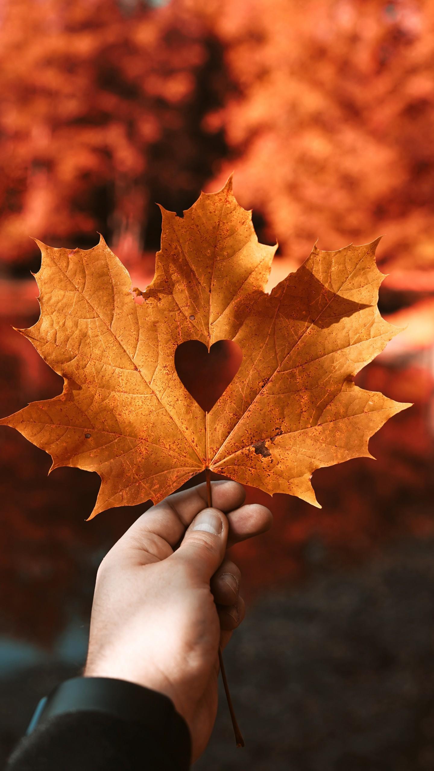 عکس زمینه عشق و قلب در برگ پاییزی پس زمینه