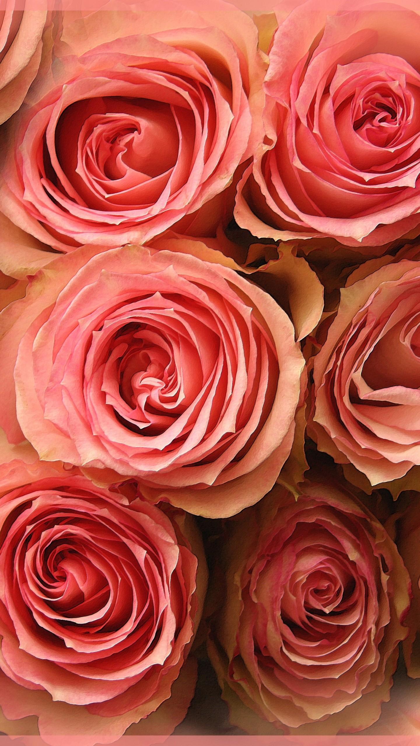 عکس زمینه دسته گل های رز صورتی پس زمینه