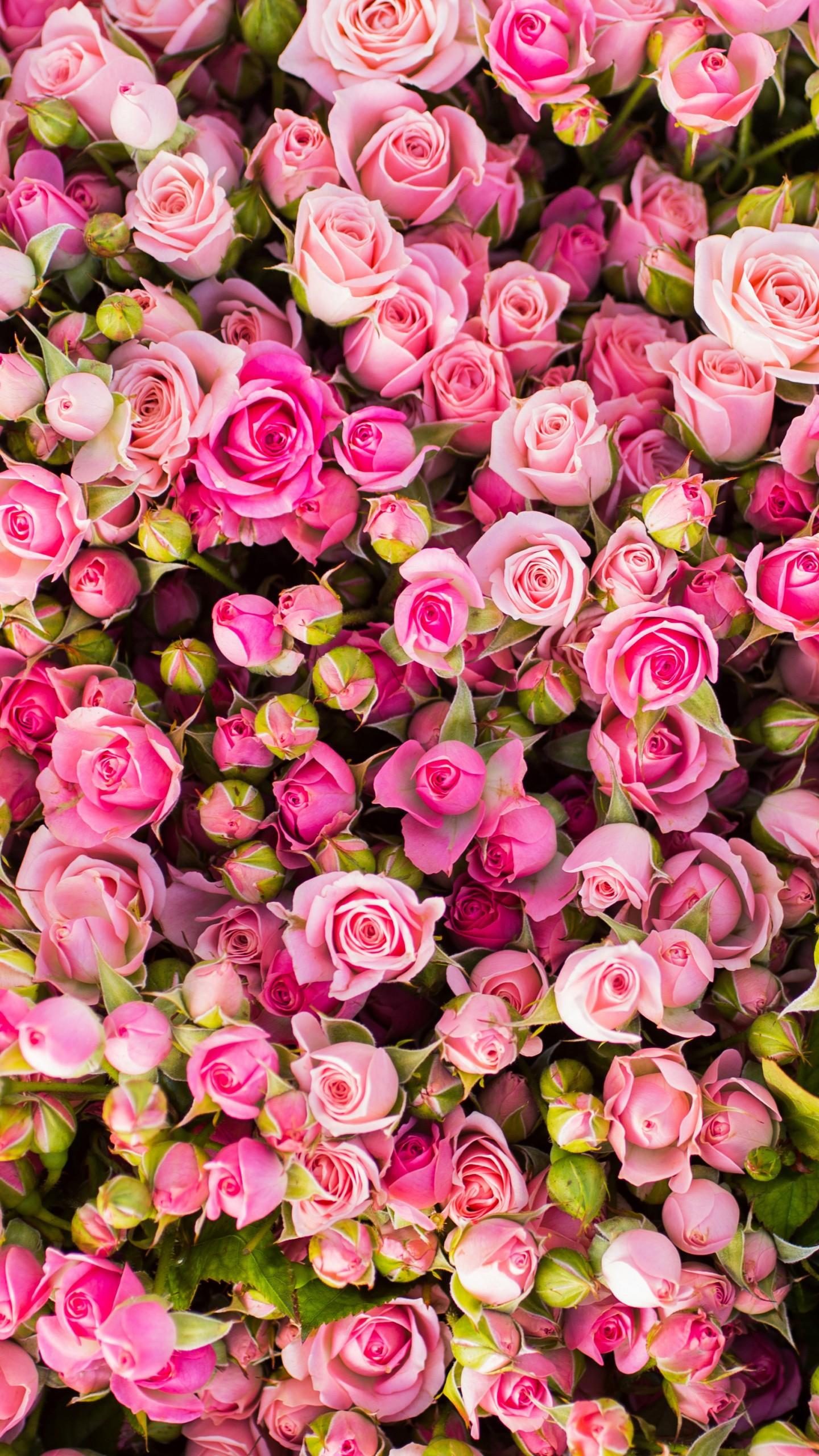 عکس زمینه دسته گل های رز صورتی زیبا پس زمینه
