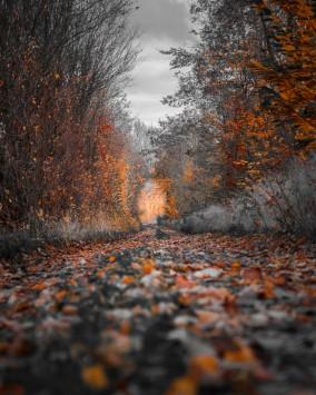 عکس زمینه درختان پاییز