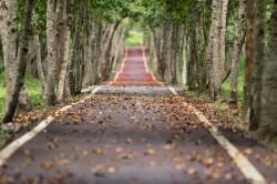عکس زمینه جاده خالی بین درختان