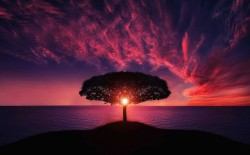 عکس زمینه طلوع صورتی و درخت نزدیک آب