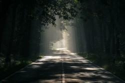 عکس زمینه جاده احاطه شده توسط درختان بلند