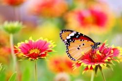 عکس زمینه پروانه نشسته روی گل
