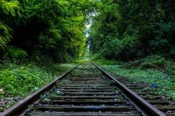 عکس زمینه راه آهن وسط درختان